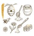 set of honey elements sketch of sweet vector image
