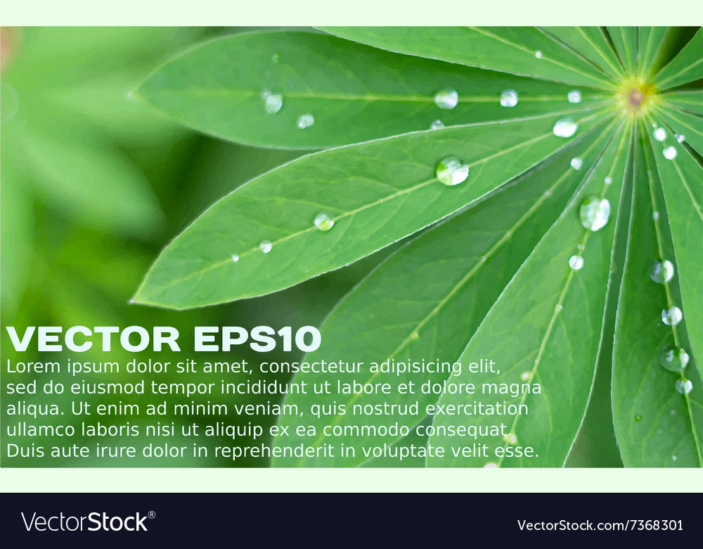 Closeup of fresh green leaves and water drops vector