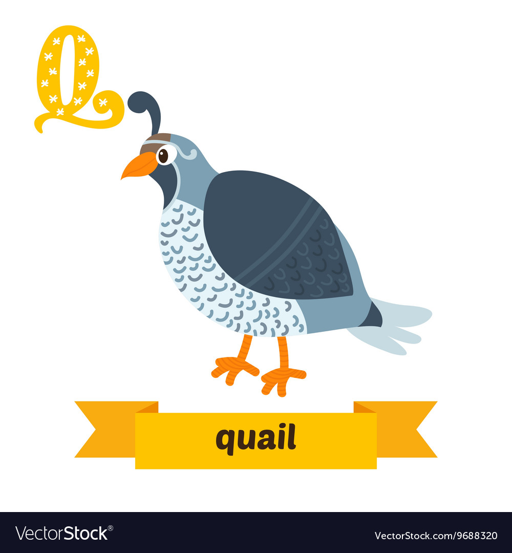 Quail q letter cute children animal alphabet in vector