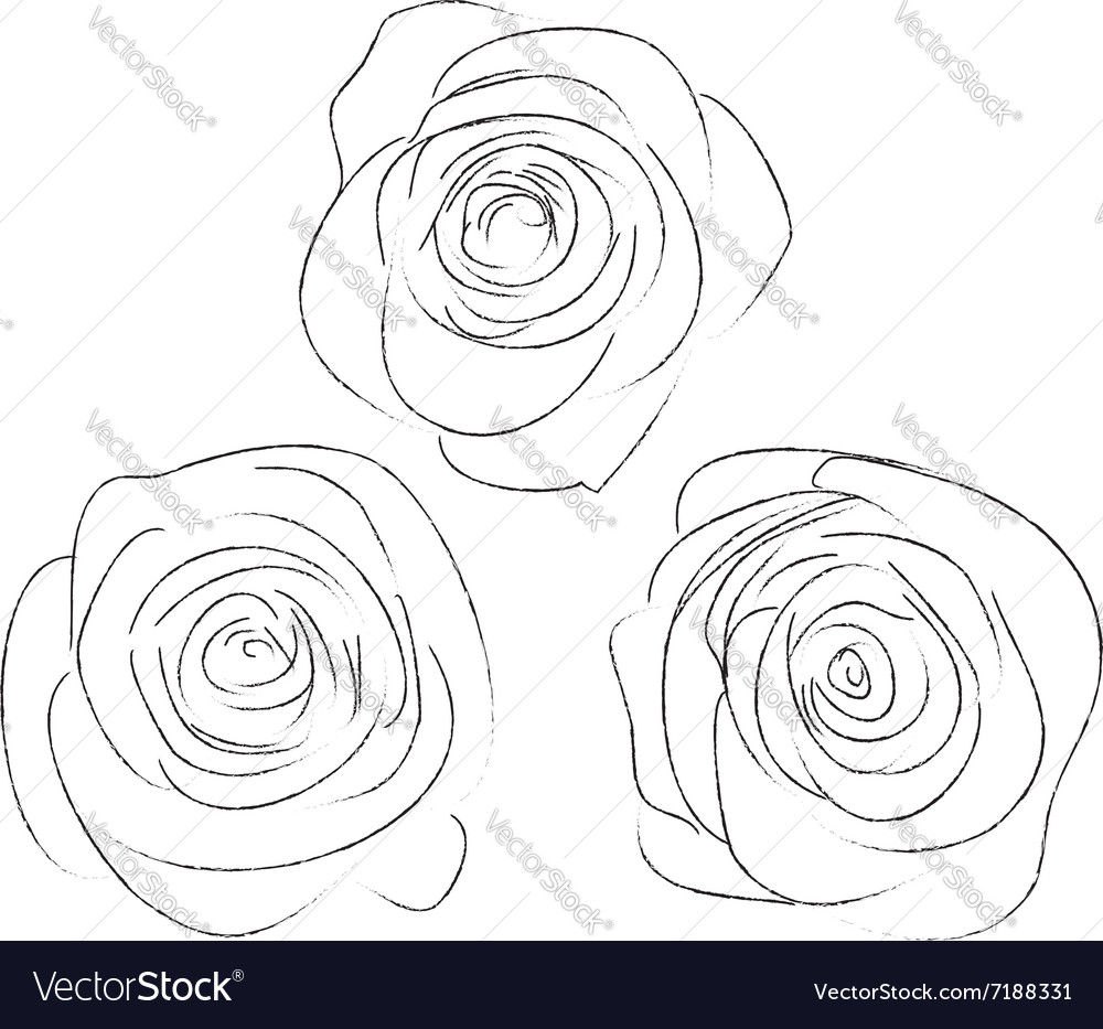 Set of three sketches of roses vector