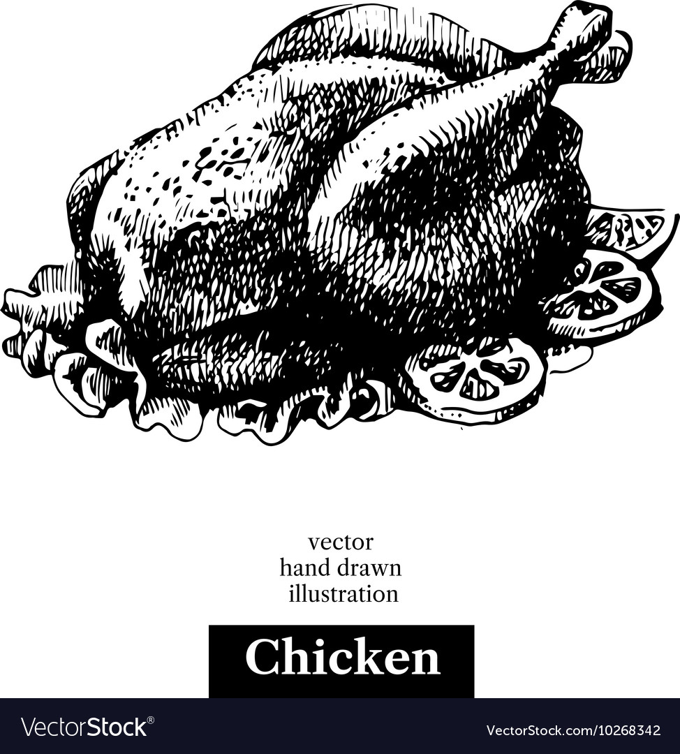Chicken vintage fast food hand drawn sketch vector