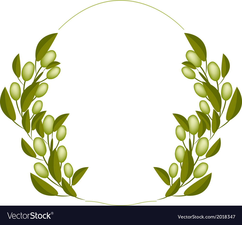 A fresh olive wreaths on white background vector