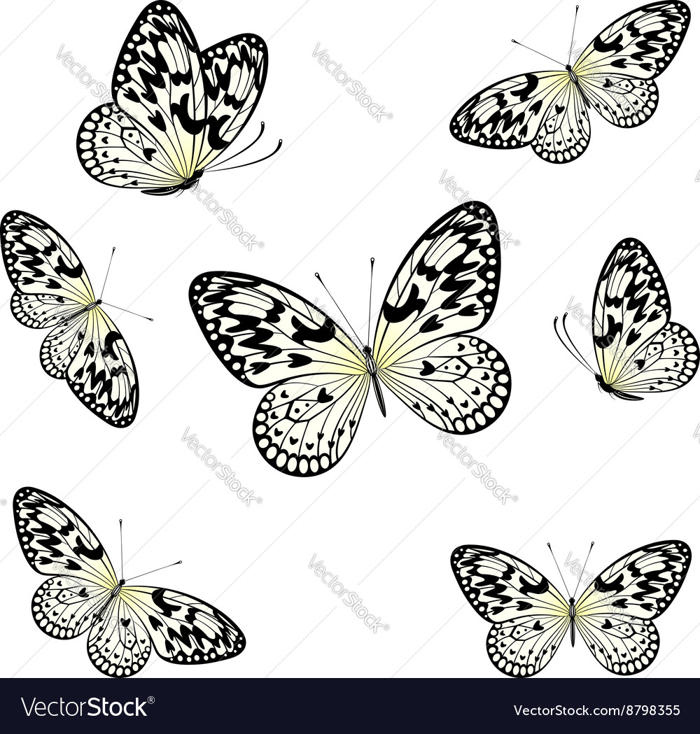 Stylized butterflies flying vector