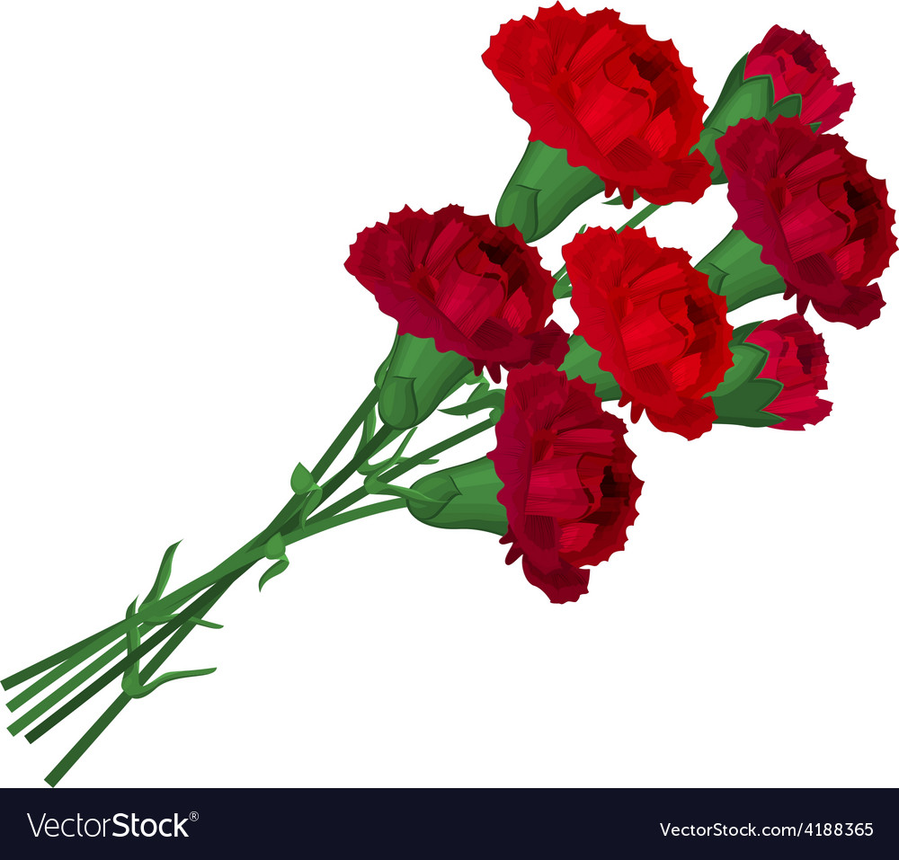 Bunch with red carnations vector