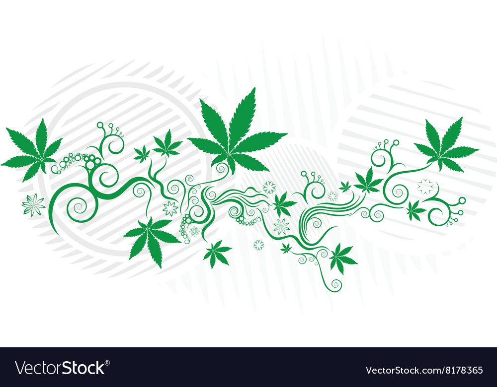 Cannabis marijuana green leaf texture background vector