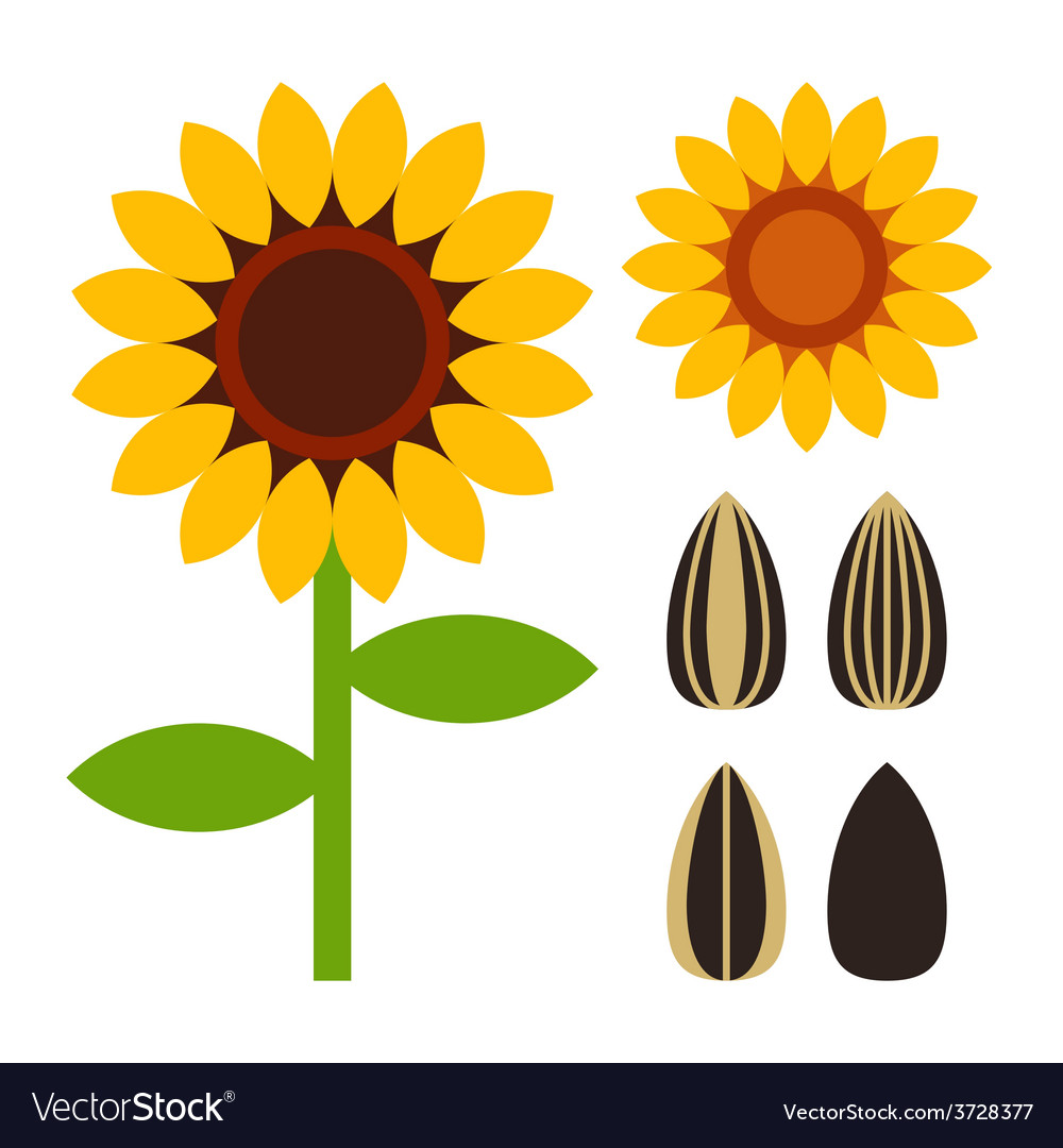Sunflowers and seeds symbol vector