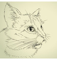 drawing cat vector image
