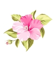 Hibiscus tropical flower vector image vector image