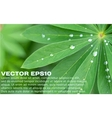Close-up of fresh green leaves and water drops vector image