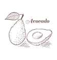 Engraving style avocado vector image