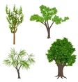 Highly detailed realistic cartoon trees set Wood vector image