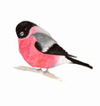 watercolor bird bullfinch vector image