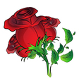 red rose on white background vector image
