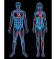 Circulatory system of a human vector image vector image