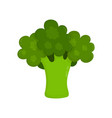 broccoli raw modern flat style vector image