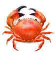 red crab vector image