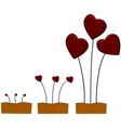 Love growing vector image vector image