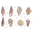 Set with sea shells vector image