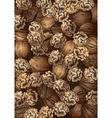 Hand Drawn Walnuts Texture vector image