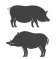 Pig Boar vector image