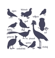 bird silhouettes isolated on white vector image
