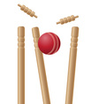 cricket ball and wickets vector image vector image
