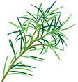 tea tree vector image vector image