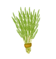 Fresh White Popinac Bunch on White Background vector image vector image