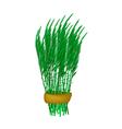 Fresh Green Acacia Pennata Bunch on White vector image vector image