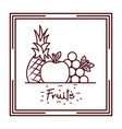 pineapplee grapes apple harvest fruits vector image