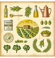 Vintage colorful olive harvest set vector image