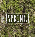 Realistic Moss texture vector image vector image