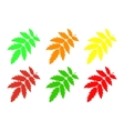 Set rowan leaf vector image