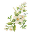 watercolor wreath jasmine and mint isolated vector image