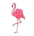 cute graphic flamingo vector image