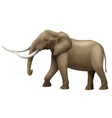 The Elephant vector image