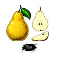 pear drawing isolated hand drawn full pear vector image