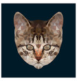 low poly kitten head vector image