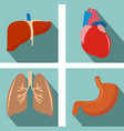 set of organs - lungs liver heart stomach vector image