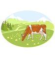 The white and red cow is grazed on the Alpine mead vector image vector image