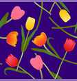 colorful tulip on blue violet background vector image