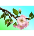 Apple-tree branch with flowers vector image