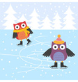 Ice skating cute owls vector image