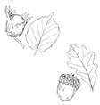 Fall Fruits and leaves vector image