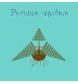 flat on background Pteridium vector image