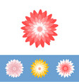 chrysanthemum or gerber daisy flower vector image