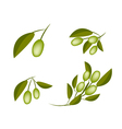 Set of Green Olives on A Branch vector image