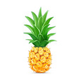 pineapple with green leaf vector image vector image