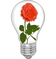 Red rose in a bulb vector image vector image