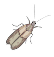 Moth on a white background vector image